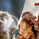 Cane e gatto: amori di primavera