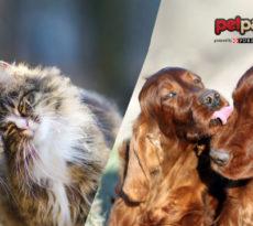amori-primavera-cane-gatto