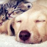 Concorsi, iniziative e notizie per cani e gatti: scopri le novità di marzo!