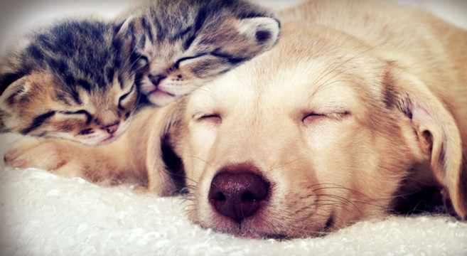 Top Concorsi, iniziative e notizie per cani e gatti: scopri le novità  NG75