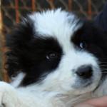 Cuccioli abbandonati da adottare in canile
