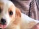 cucciolo-gratis