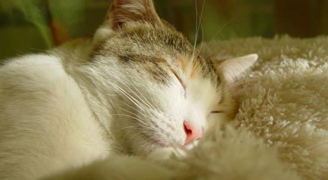 Gatto che dorme - Perche i gatti fanno la pipi sul letto ...