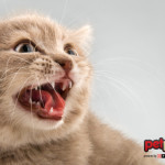 Le parole dei gatti: i 6 suoni con cui comunicano