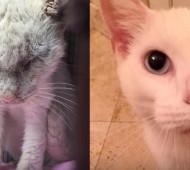 storia del gatto salvato