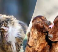 accoppiamento-primavera-cane-gatto