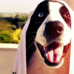 Come e perché lavare il cane: 6 consigli