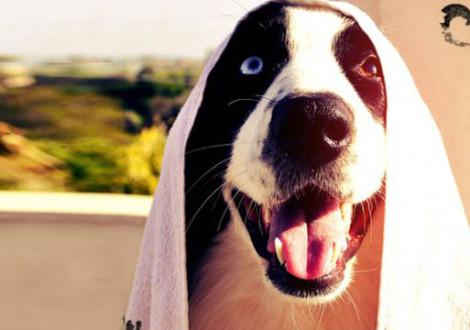 cane bagnetto