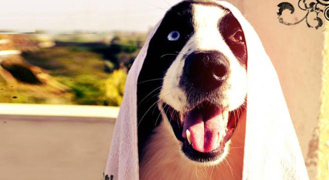 Come e perch lavare il cane petpassion blog - Come fare il bagno al cane ...