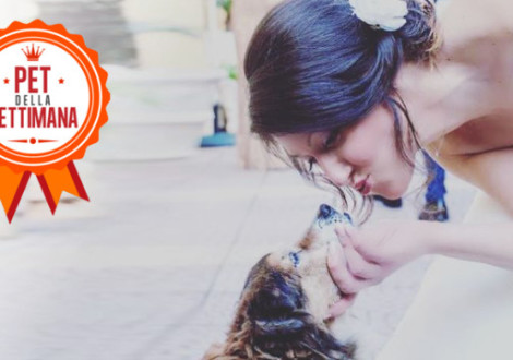 cane-matrimonio