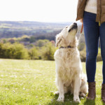 A passeggio con il cane: meglio della palestra!