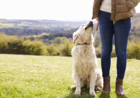 cane-passeggiata