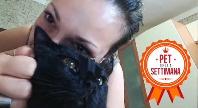 Storia di un gattino nero… incontrato per caso!