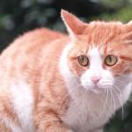 Consigli per non smarrire il proprio gatto