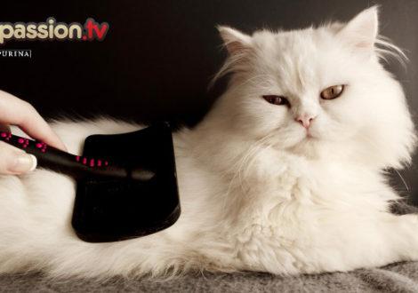 perchè-spazzolare-il-gatto