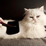 Quando e perché spazzolare il gatto?