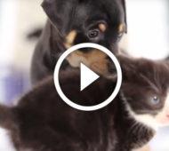 cuccioli-e-gattini video