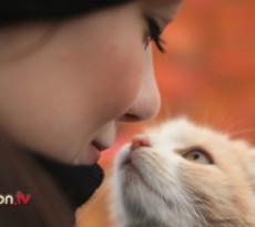 età umana del gatto