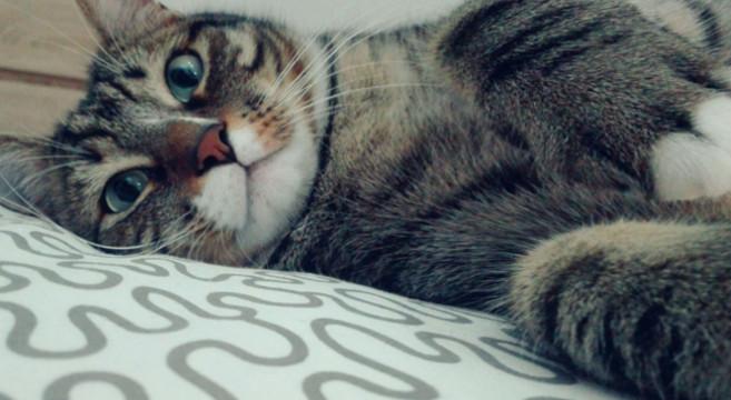 Gatto letto - Gatto pipi letto ...