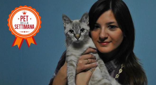 La mia prima gattina: la storia di Lana e Laura