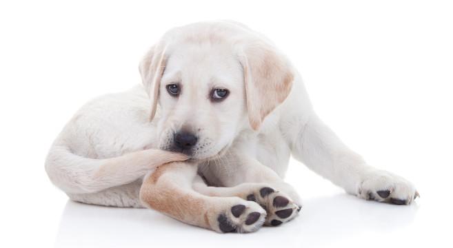 Sverminazione cani e cuccioli: quando va fatta e perché?