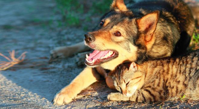 Arriva l'estate: i consigli per cani e gatti