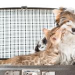 Assicurazioni per cani in vacanza