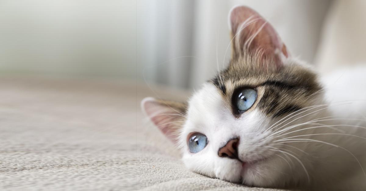 Che fa il mio gatto quando solo a casa risponde una for Cosa mangia il gatto