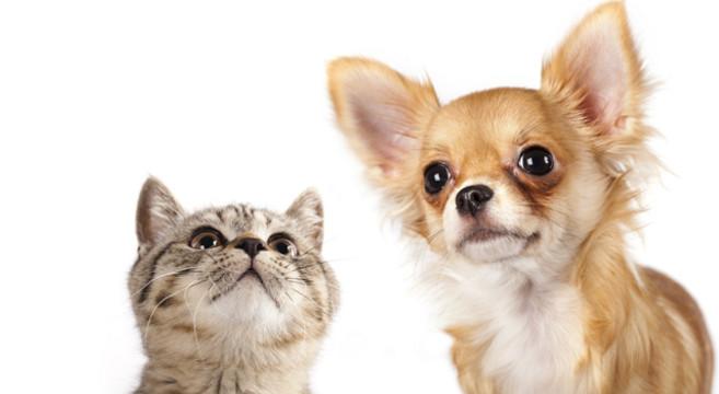 Vacanze con gli animali: ecco le 10 città più pet-friendly in Europa ed in Italia