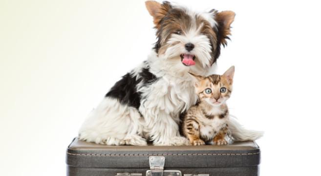 valigia-cane-gatto