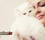 gatto-mi-vuole-bene