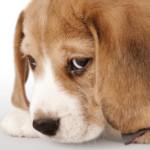 Il cane si sta annoiando? 7 indizi per scoprirlo