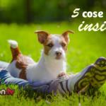 5 buone abitudini di vita con il proprio cane