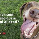 """Prenditi cura del """"sorriso"""" del tuo cane!"""