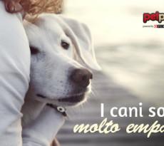 Cani empatici