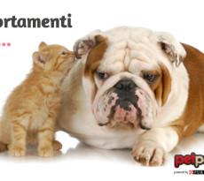 comportamento-cane-gatto