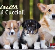 curiosità-cuccioli