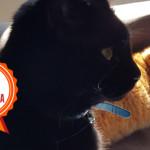 Un gattino rosso, un gattino nero… e un sogno realizzato