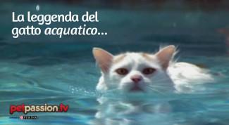 gatto nuota