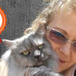 Kiko: storia del gatto persiano che mi ha ridato il sorriso