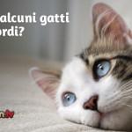 La sordità nel gatto: cause e consigli