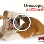 AUDIO: scopri l'oroscopo per cane e gatto di settembre