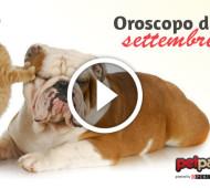 Oroscopo cane e gatto