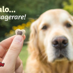 Premia il cane con uno snack… ma senza esagerare!