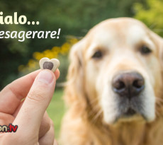 premio-cane