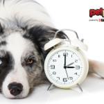 I cani hanno il senso del tempo?