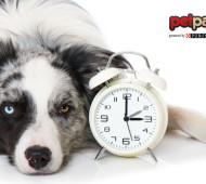 cane tempo