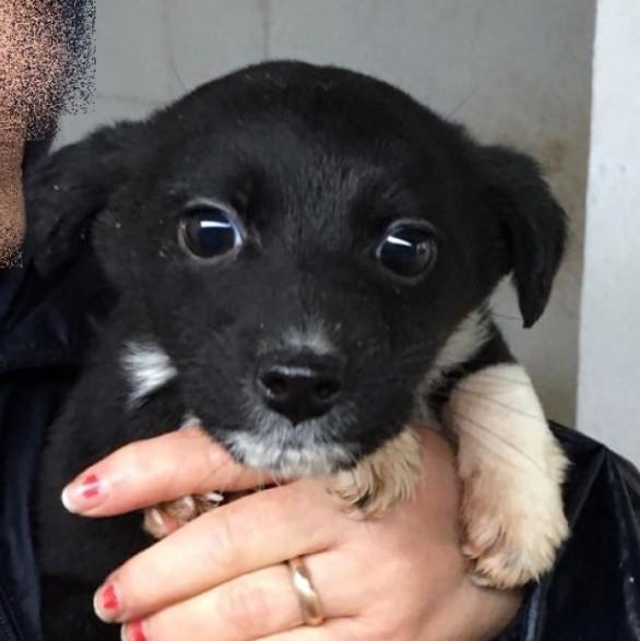 cucciola-adozione