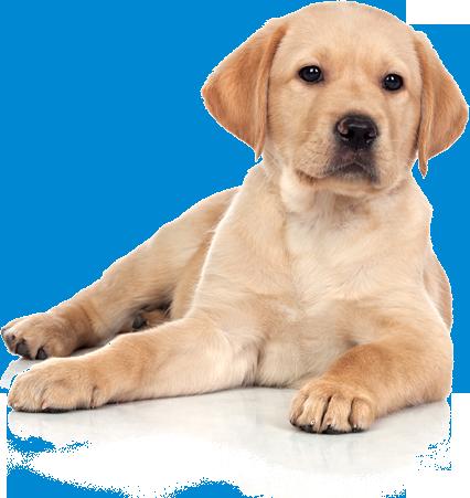 cucciolo-cane