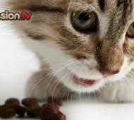 croccantini per gatto